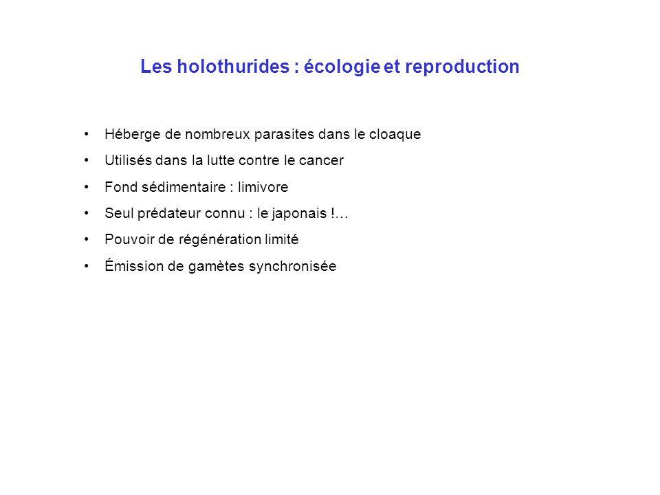 Les holothurides : écologie et reproduction Héberge de nombreux parasites dans le cloaque Utilisés dans la lutte contre le cancer Fond sédimentaire :