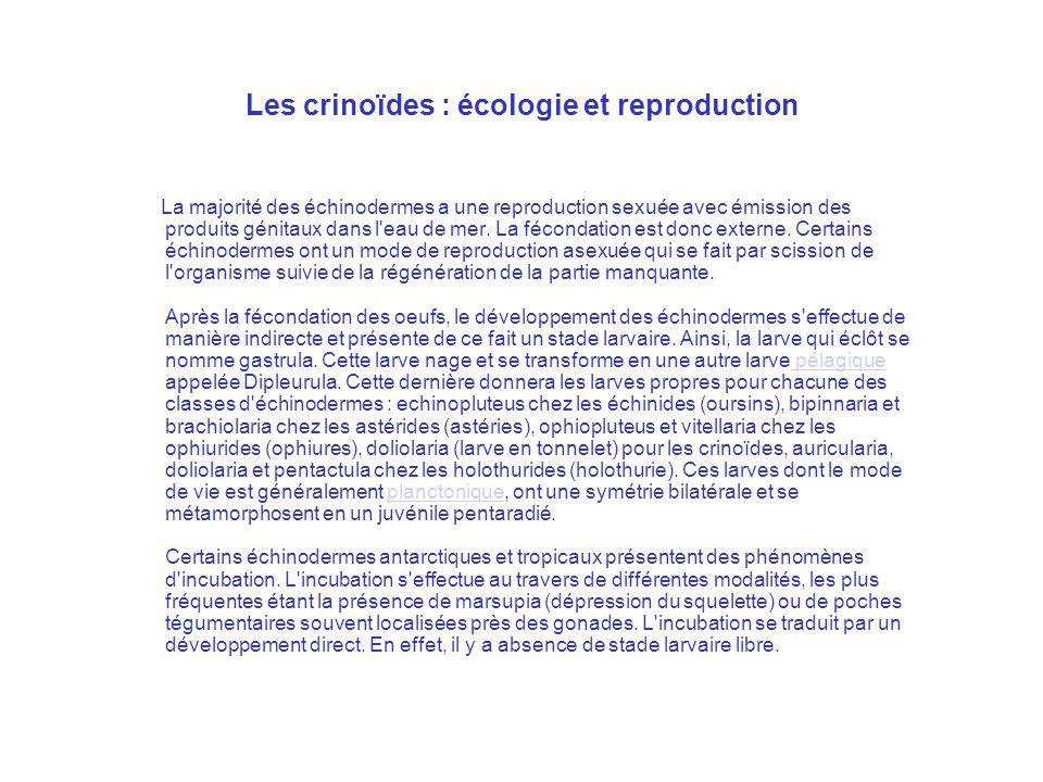 Les crinoïdes : écologie et reproduction La majorité des échinodermes a une reproduction sexuée avec émission des produits génitaux dans l'eau de mer.