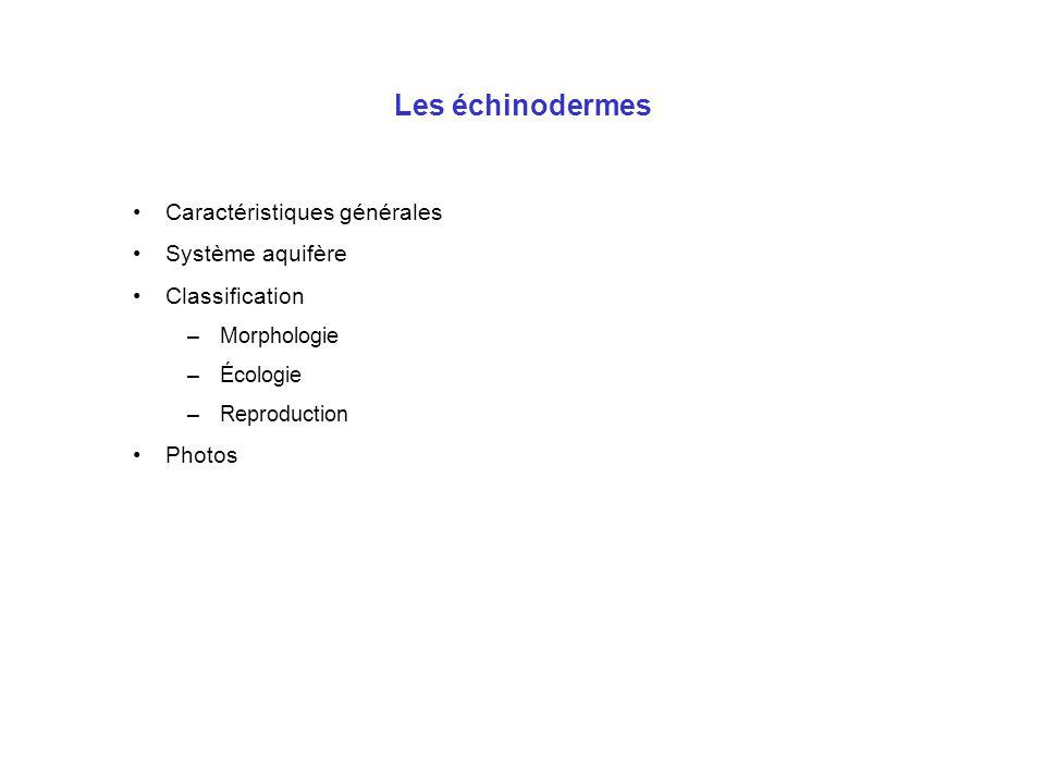 Les échinodermes : caractéristiques générales Animaux à « peau hérissée » Groupe très ancien (-580 Ma) Exclusivement marins Symétrie pentaradiée, mais larve bilatéralienne  métamorphose Pas de tête Endosquelette calcaire : plaques ou spicules Système nerveux superficiel et diffus (épithélioneurien), concentration autour de la bouche + 5 « nerfs » Système aquifère (locomotion) Pas d'organes respiratoires spécifiques (sauf chez les holothuries) Pas de système excréteur spécifique : podias Très faible dépense énergétique par rapport à la taille