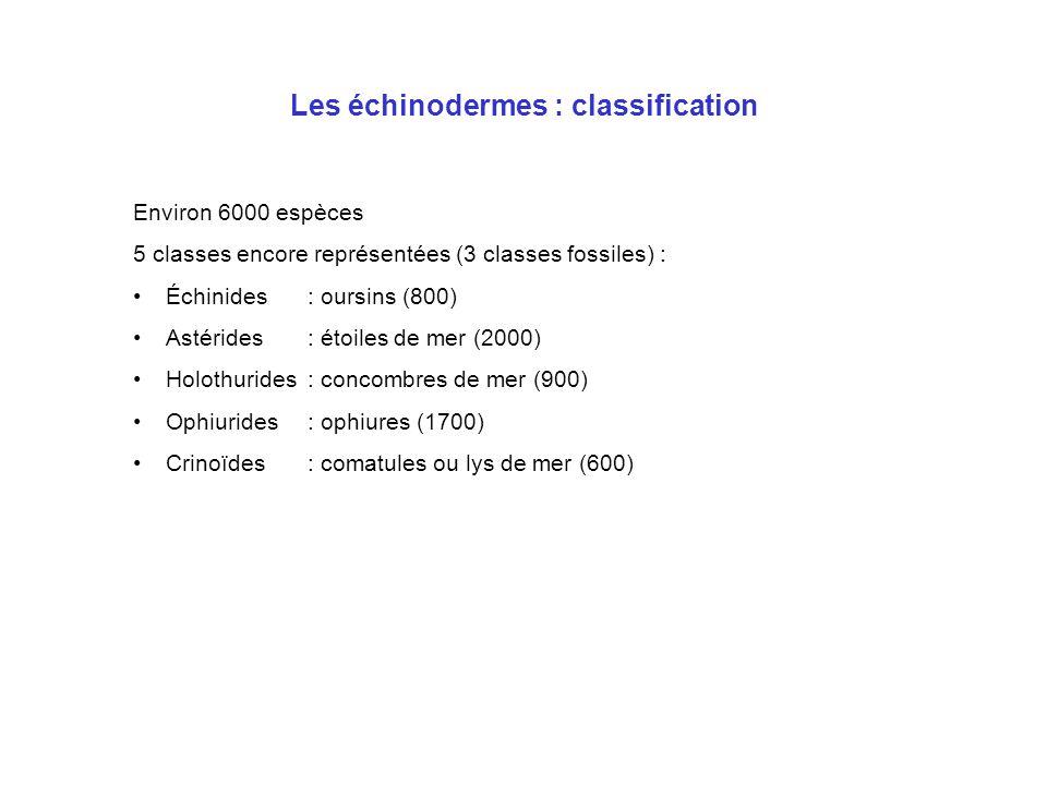 Les échinodermes : classification Environ 6000 espèces 5 classes encore représentées (3 classes fossiles) : Échinides: oursins (800) Astérides: étoile