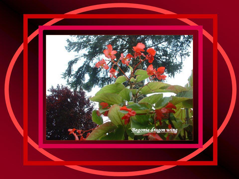 Invité dans l'arbre Photo insolite où la sphère de lumière blanche qu est le soleil semble avoir fait son nid dans l enchevêtrement de branches d un prunus pourpre en fleurs.
