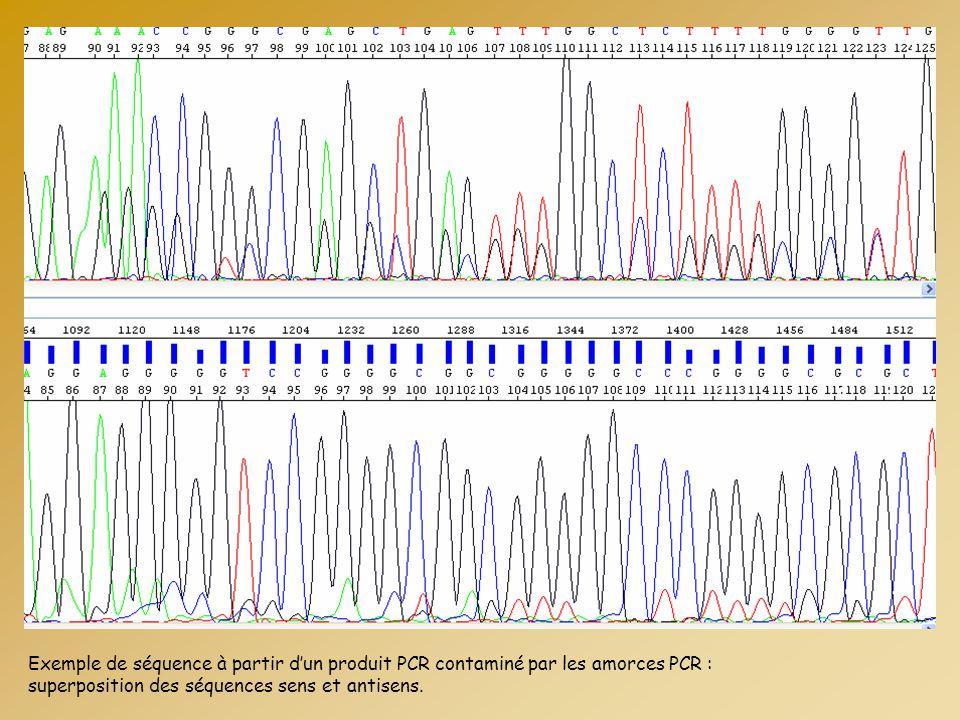 Exemple de séquence à partir d'un produit PCR contaminé par les amorces PCR : superposition des séquences sens et antisens.