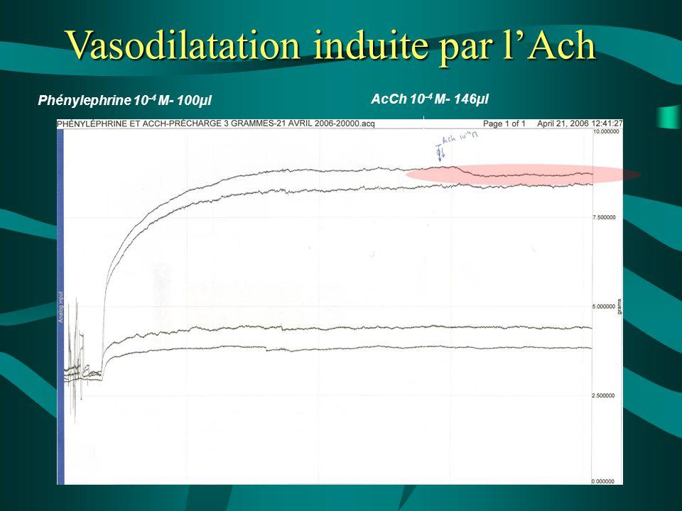 AcCh 10 -4 M- 146µl Phénylephrine 10 -4 M- 100µl Vasodilatation induite par l'Ach