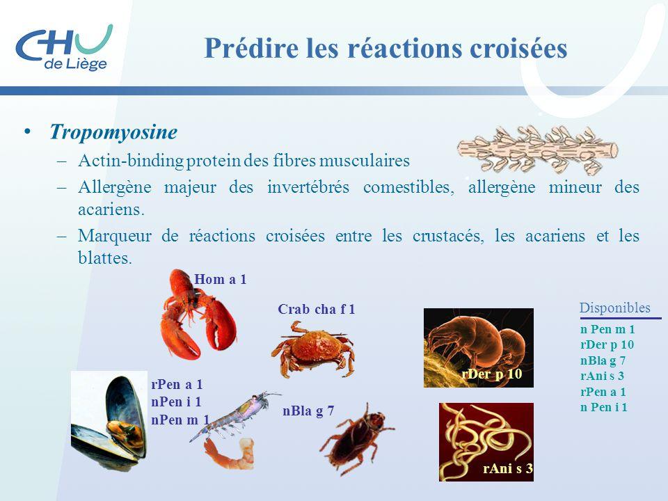 Tropomyosine –Actin-binding protein des fibres musculaires –Allergène majeur des invertébrés comestibles, allergène mineur des acariens. –Marqueur de