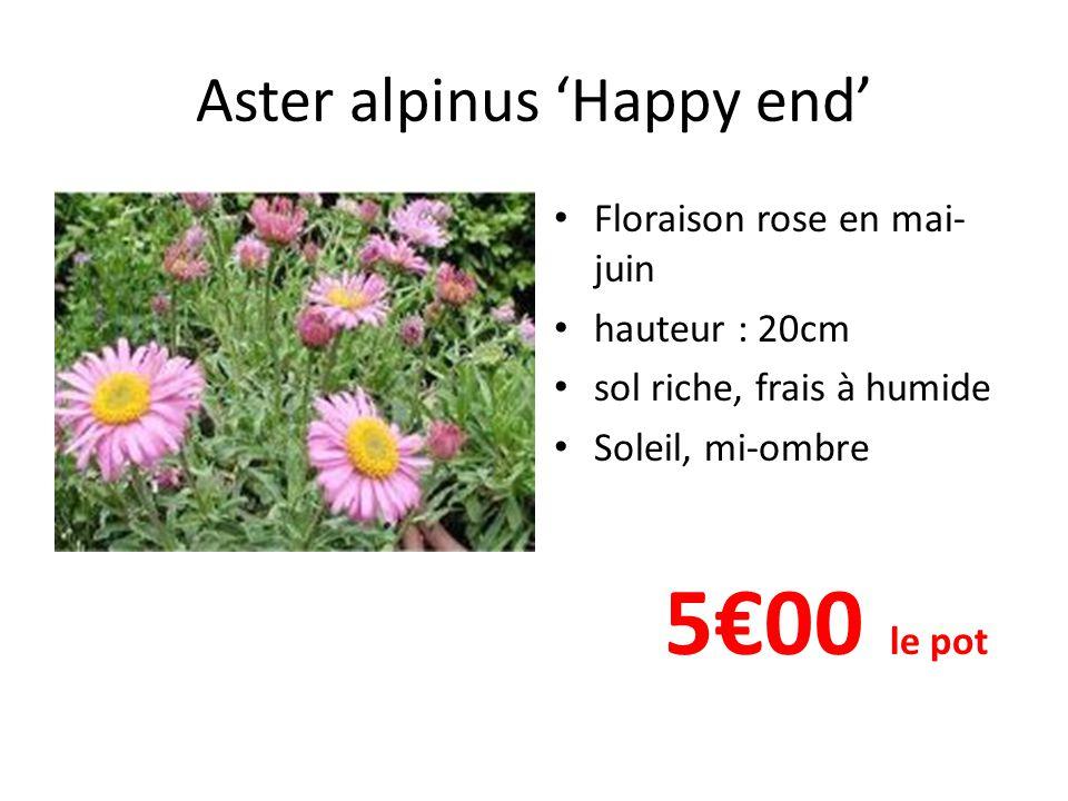 Aster alpinus 'Happy end' Floraison rose en mai- juin hauteur : 20cm sol riche, frais à humide Soleil, mi-ombre 5€00 le pot