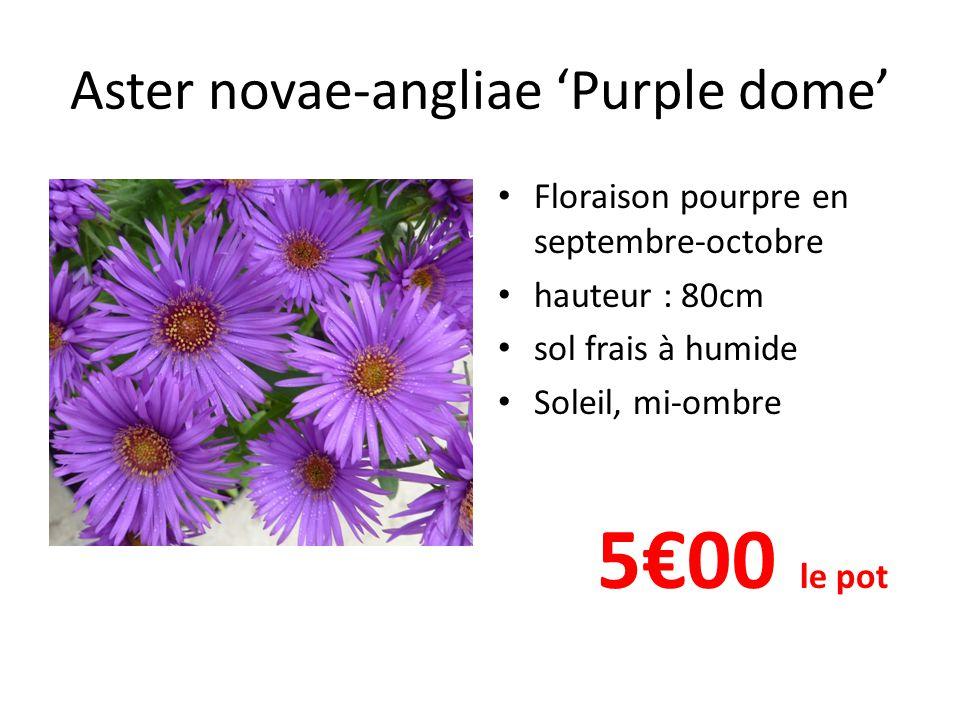 Aster novae-angliae 'Purple dome' Floraison pourpre en septembre-octobre hauteur : 80cm sol frais à humide Soleil, mi-ombre 5€00 le pot