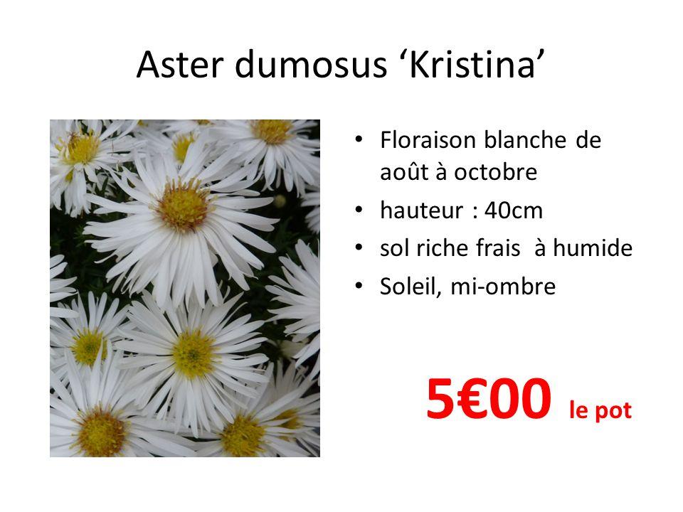 Aster dumosus 'Kristina' Floraison blanche de août à octobre hauteur : 40cm sol riche frais à humide Soleil, mi-ombre 5€00 le pot