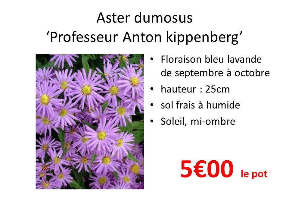 Aster ericoïdes 'Prostrate form' Floraison blanc en septembre- octobre hauteur : 20cm sol frais à humide Soleil, mi-ombre 5 €00 le pot