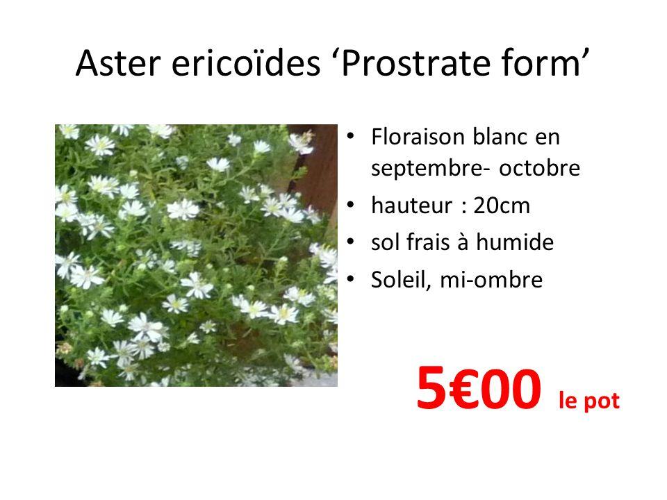 Aster frikartii 'Monch' Floraison bleu de juillet à septembre hauteur : 70cm sol frais à humide Soleil, mi-ombre 5€ 00 le pot
