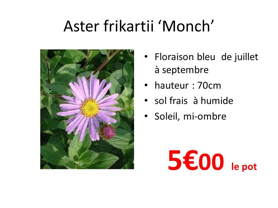 Aster frikartii Wunder von Stafa' Floraison bleu de juillet à septembre hauteur : 70cm sol frais à humide Soleil, mi-ombre 5€00 le pot