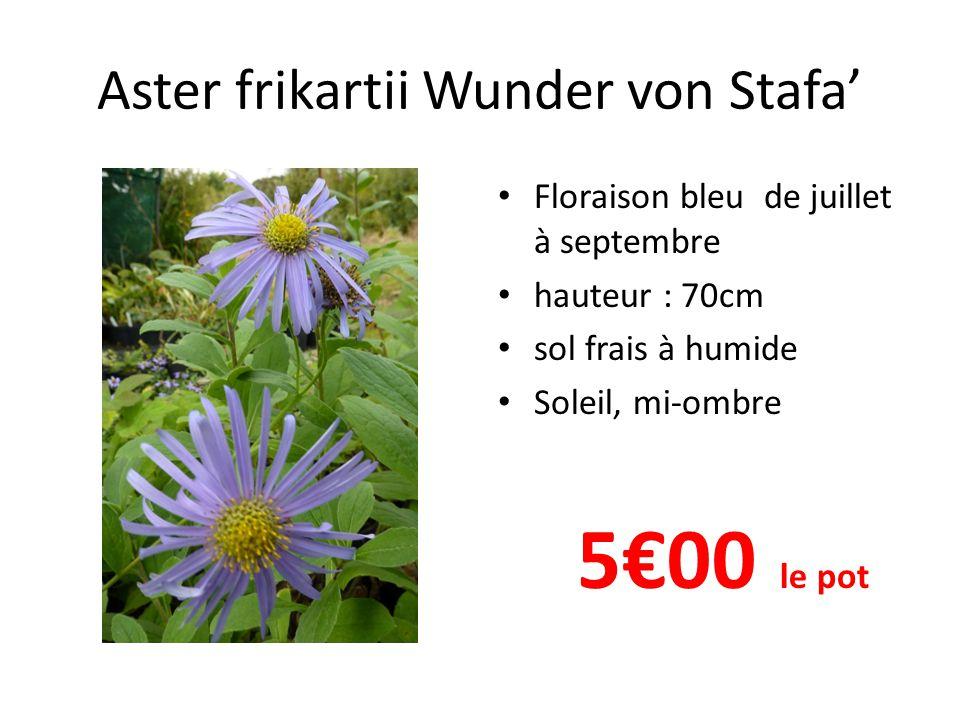 Aster laterifolius 'Lady in black' Floraison blanc cœur rose en septembre- octobre Feuillage vert foncé hauteur : 120cm sol frais à humide Soleil, mi-ombre 5€00 le pot