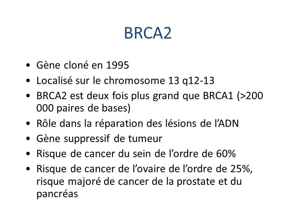 BRCA2 Gène cloné en 1995 Localisé sur le chromosome 13 q12-13 BRCA2 est deux fois plus grand que BRCA1 (>200 000 paires de bases) Rôle dans la réparat