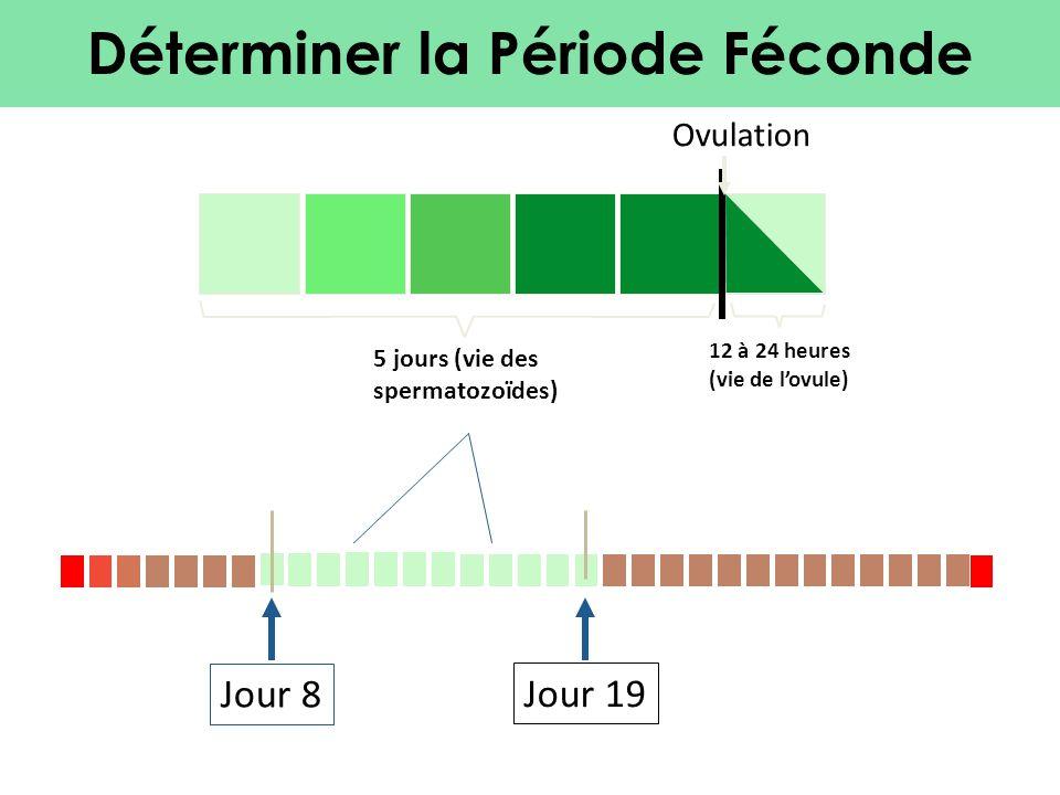 Déterminer la Période Féconde Jour 8Jour 19 5 jours (vie des spermatozoïdes) 12 à 24 heures (vie de l'ovule) Ovulation