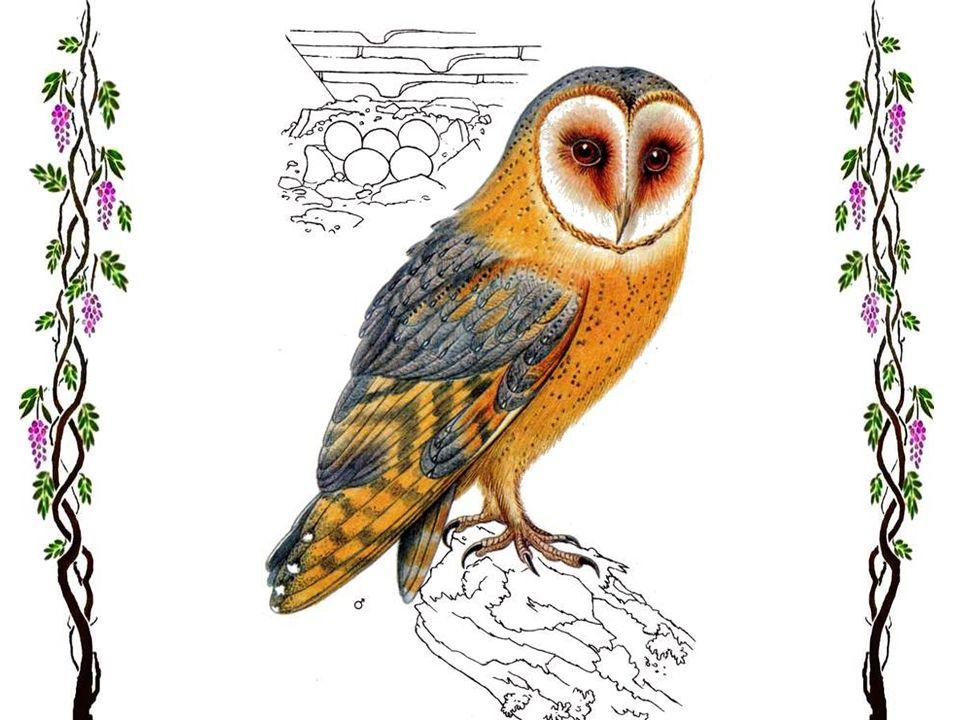 Le faucon crécerelle Comme suspendu au-dessus de la plaine, un petit rapace voltige haut dans le ciel : c'est le faucon crécerelle. De ses yeux perçan