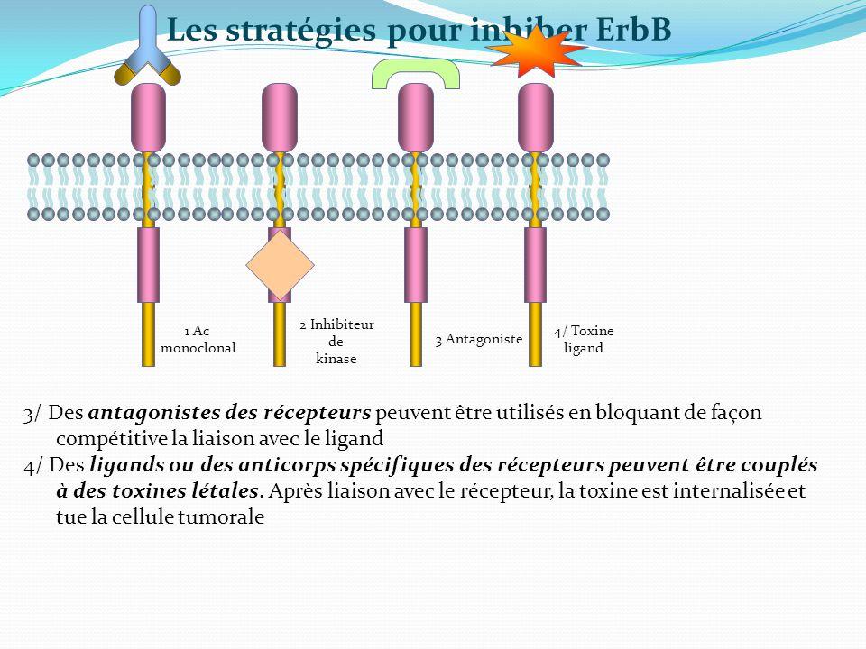 3/ Des antagonistes des récepteurs peuvent être utilisés en bloquant de façon compétitive la liaison avec le ligand 4/ Des ligands ou des anticorps sp