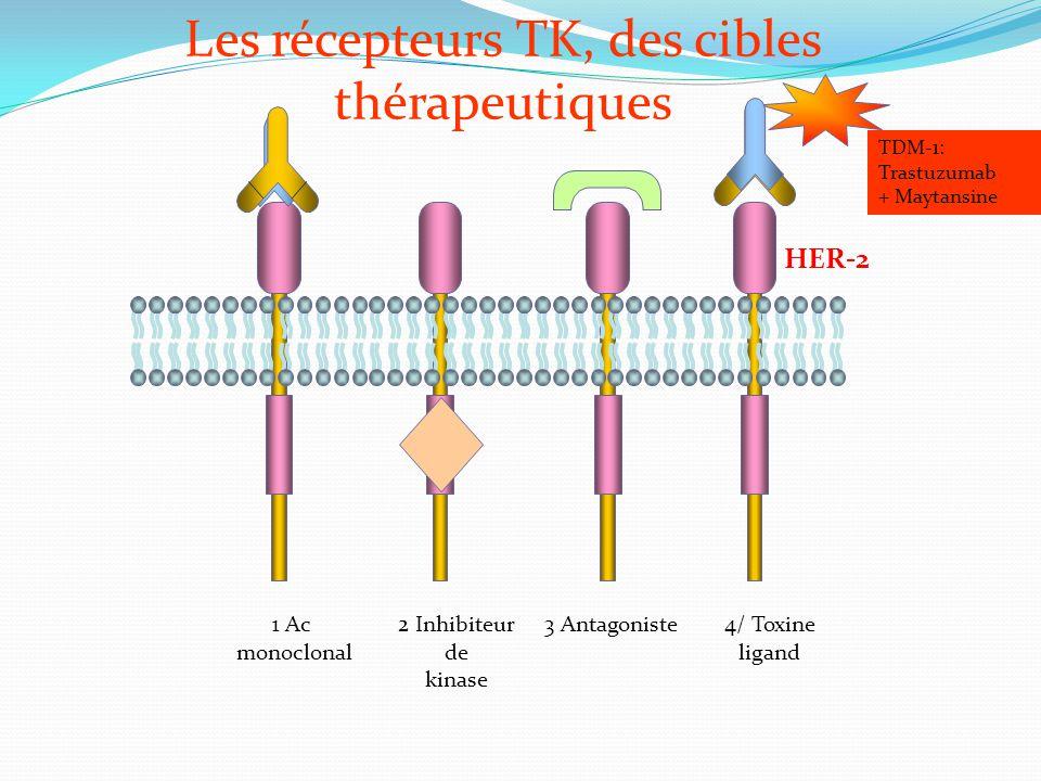 Les récepteurs TK, des cibles thérapeutiques 3 Antagoniste1 Ac monoclonal 2 Inhibiteur de kinase 4/ Toxine ligand HER-2 TDM-1: Trastuzumab + Maytansin