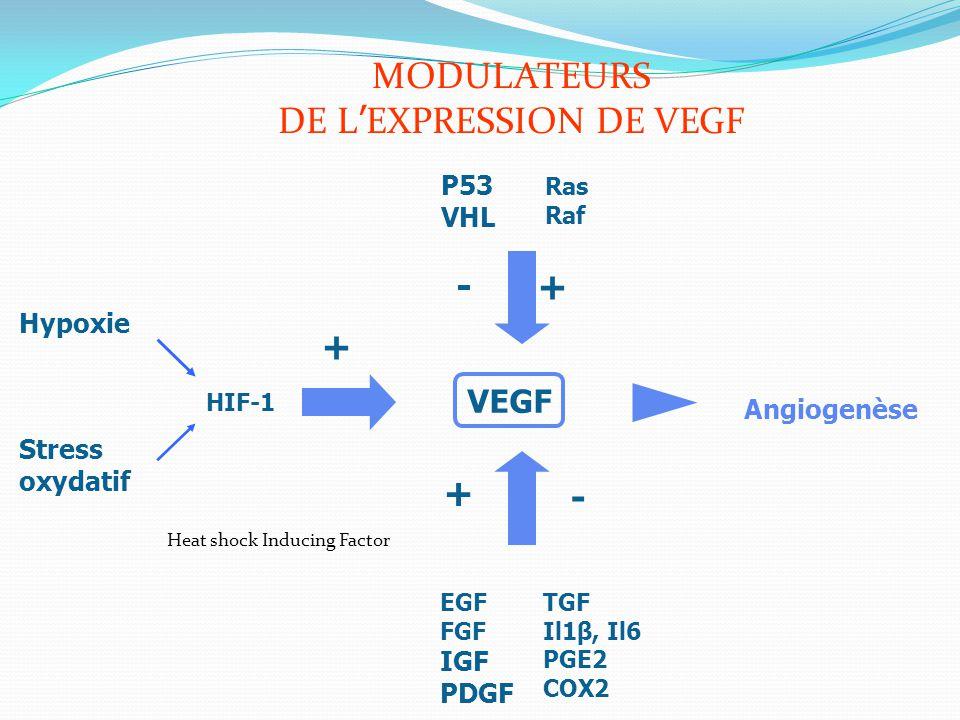 TGF Il1β, Il6 PGE2 COX2 EGF FGF IGF PDGF P53 VHL VEGF Angiogenèse + Ras Raf Stress oxydatif Hypoxie HIF-1 + + MODULATEURS DE L ' EXPRESSION DE VEGF -