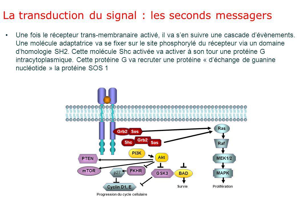 La transduction du signal : les seconds messagers Une fois le récepteur trans-membranaire activé, il va s'en suivre une cascade d'évènements. Une molé
