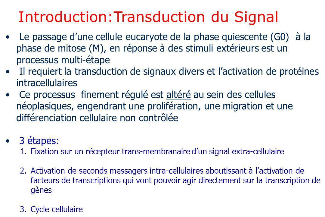 Introduction:Transduction du Signal Le passage d'une cellule eucaryote de la phase quiescente (G0) à la phase de mitose (M), en réponse à des stimuli