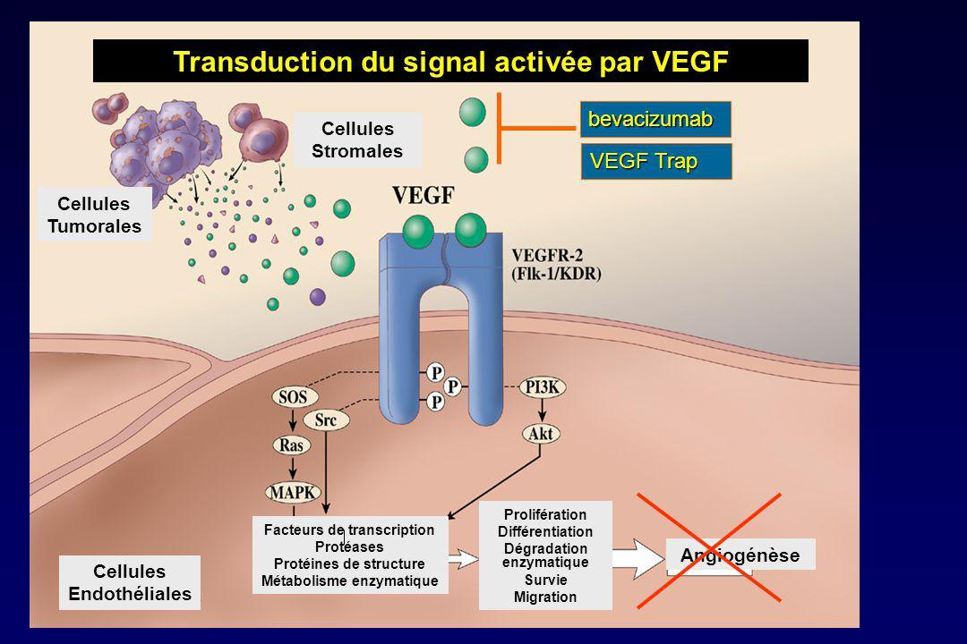 Transduction du signal activée par VEGF Cellules Tumorales Cellules Stromales Cellules Endothéliales Facteurs de transcription Protéases Protéines de