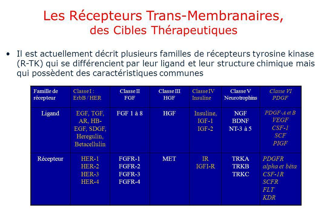 Les Récepteurs Trans-Membranaires, des Cibles Thérapeutiques Il est actuellement décrit plusieurs familles de récepteurs tyrosine kinase (R-TK) qui se