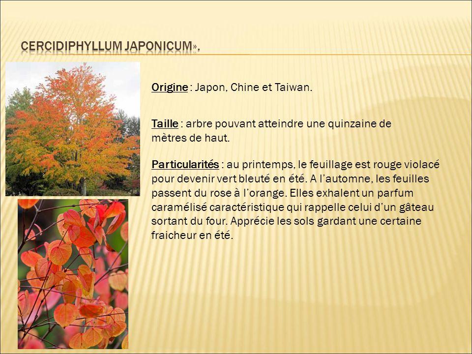 Origine : Japon, Chine et Taiwan. Taille : arbre pouvant atteindre une quinzaine de mètres de haut. Particularités : au printemps, le feuillage est ro