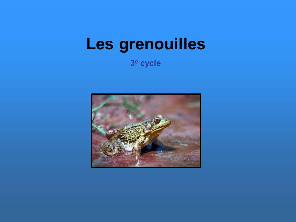 Quelques espèces québécoises La grenouille des Marais Il s agit d une vraie grenouille de taille moyenne dont la peau est douce et ocre.