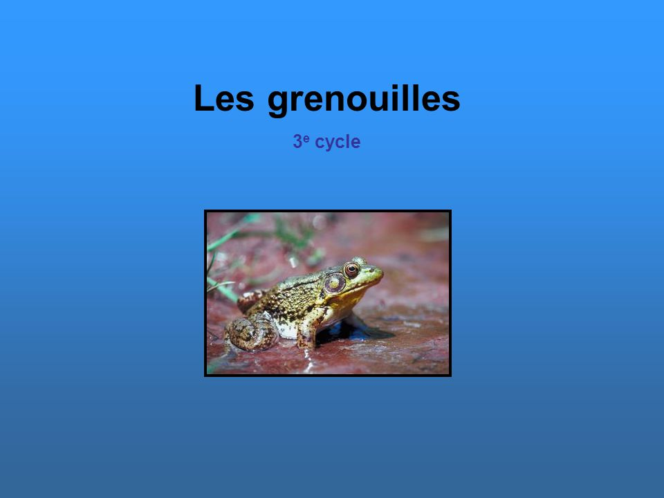 Les grenouilles 3 e cycle