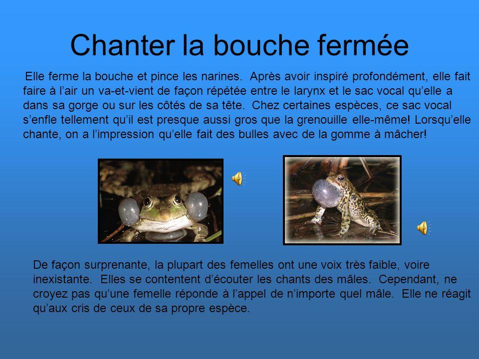 Le choix du partenaire En mars, les grenouilles sortent de leur hibernation. Dès que la température extérieure atteint environ 7°C, les individus se m
