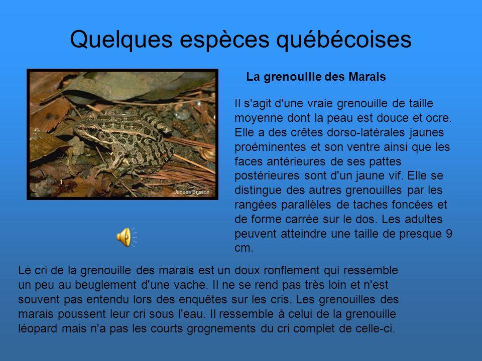Les prédateurs Il existe de nombreux prédateurs de grenouilles : couleuvres aquatiques, hérons, cigognes, loutres, belettes, taupes ou encore renards