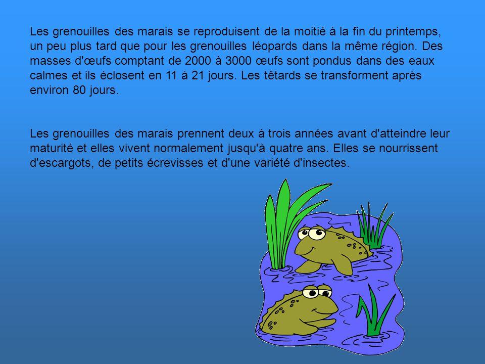 Quelques espèces québécoises La grenouille des Marais Il s'agit d'une vraie grenouille de taille moyenne dont la peau est douce et ocre. Elle a des cr