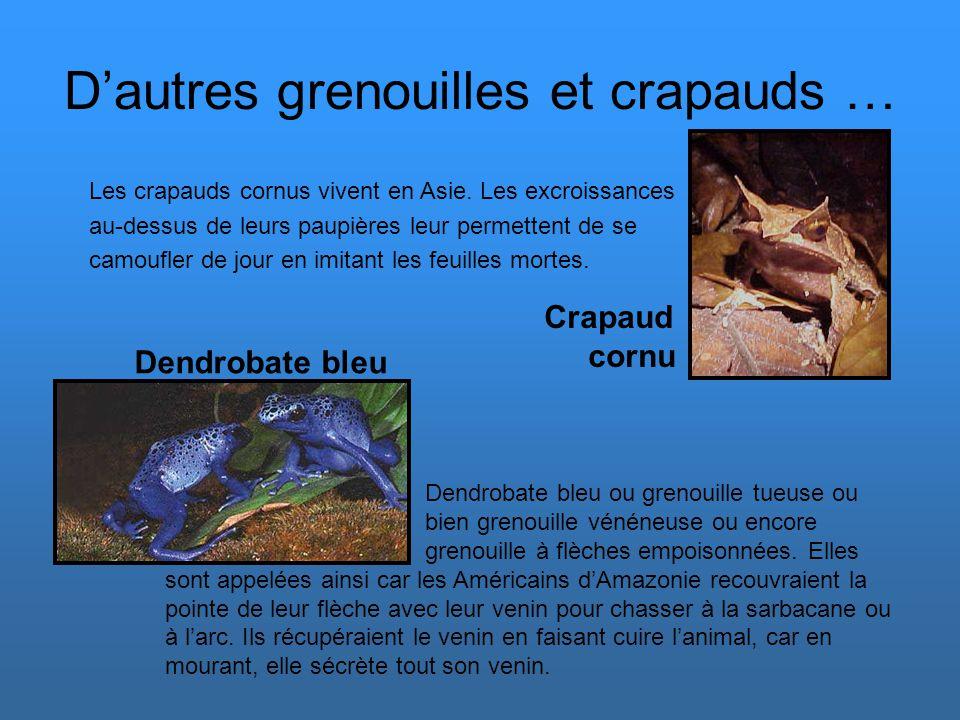 La rainette Crucifère La rainette Crucifère est une rainette typique puisqu'elle est petite, avec de grosses ventouses, et qu'elle varie en coloration