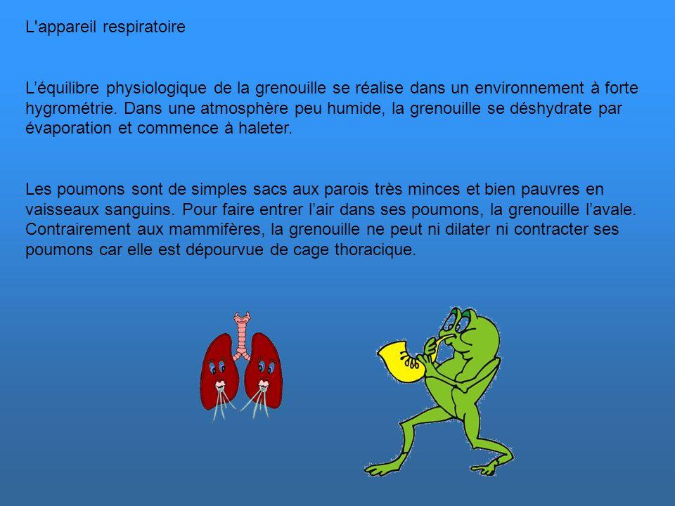 L appareil respiratoire L'équilibre physiologique de la grenouille se réalise dans un environnement à forte hygrométrie.