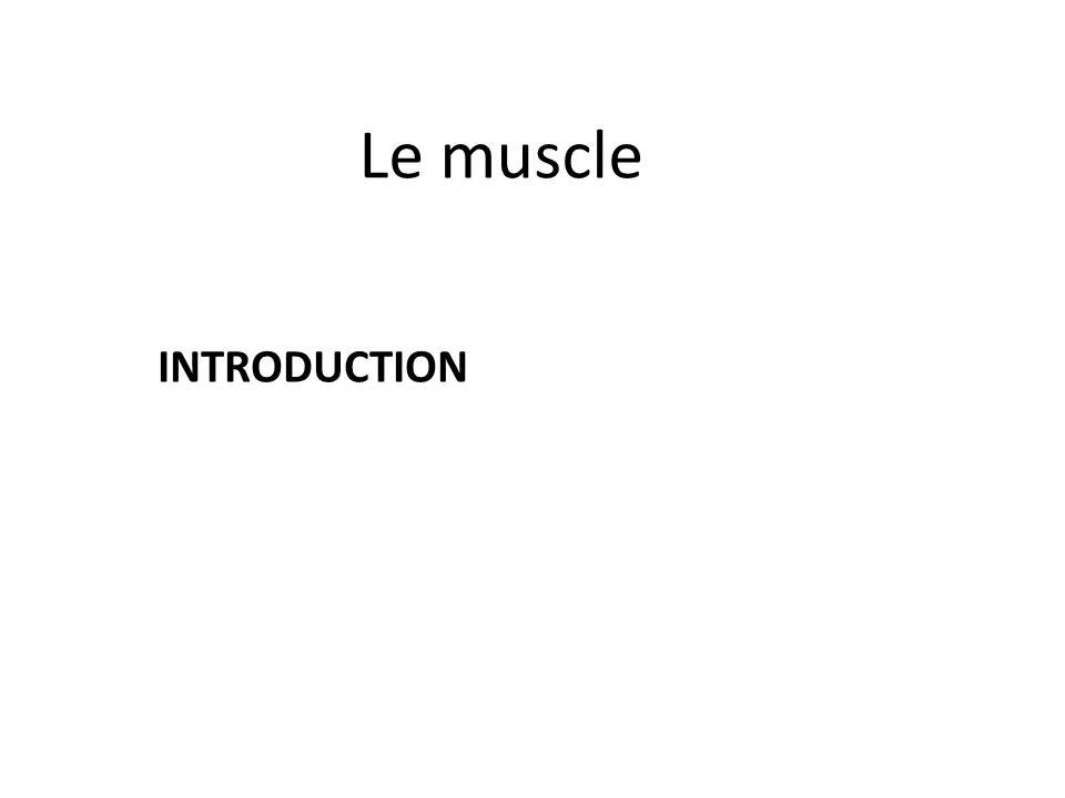 c. Les molécules de troponines