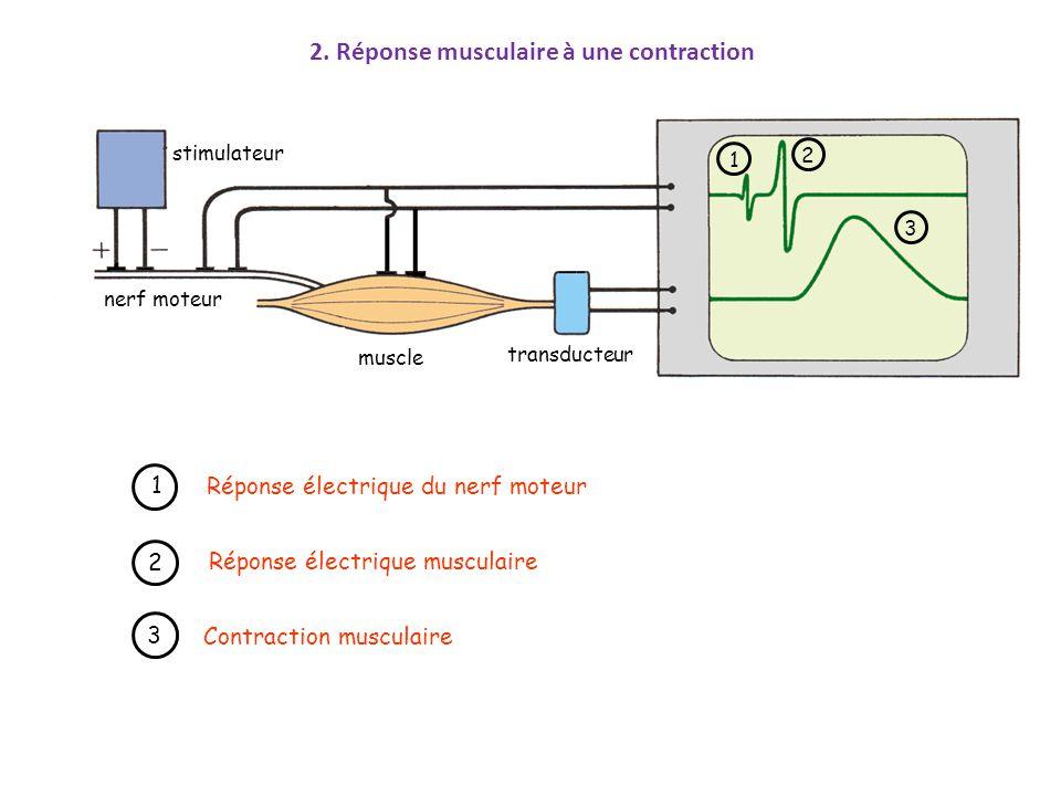 transducteur muscle nerf moteur stimulateur 1 1 Réponse électrique du nerf moteur 2 2 Réponse électrique musculaire 3 3 Contraction musculaire 2. Répo