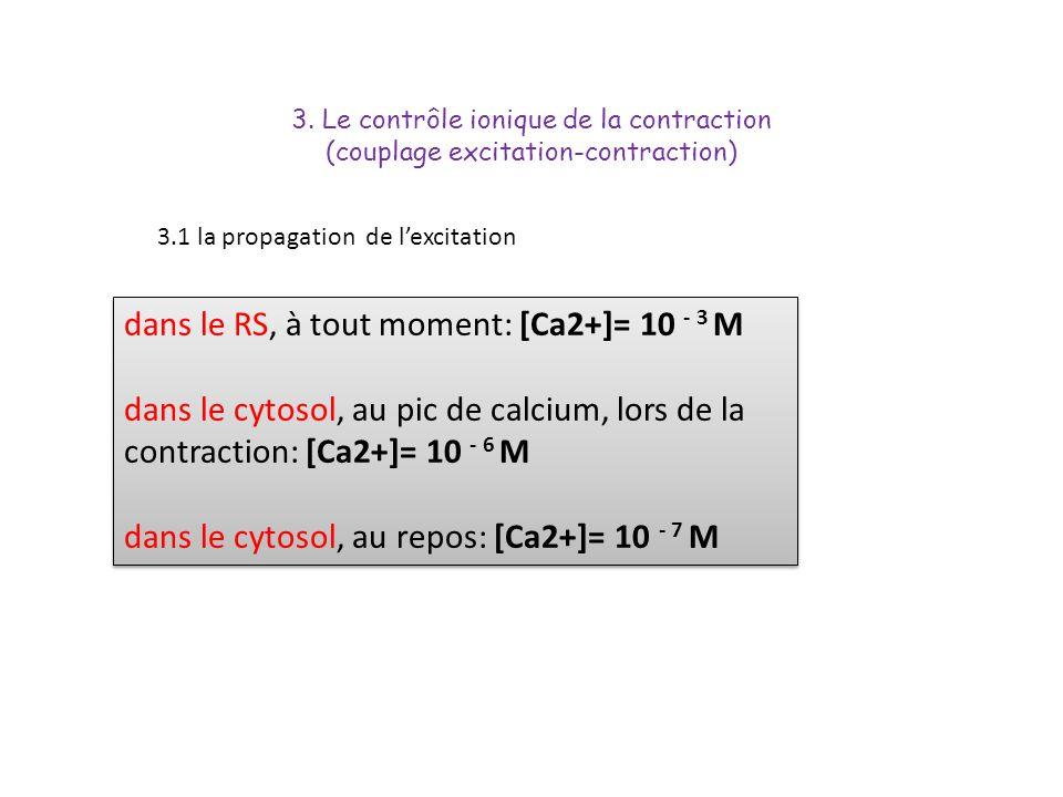 dans le RS, à tout moment: [Ca2+]= 10 - 3 M dans le cytosol, au pic de calcium, lors de la contraction: [Ca2+]= 10 - 6 M dans le cytosol, au repos: [C