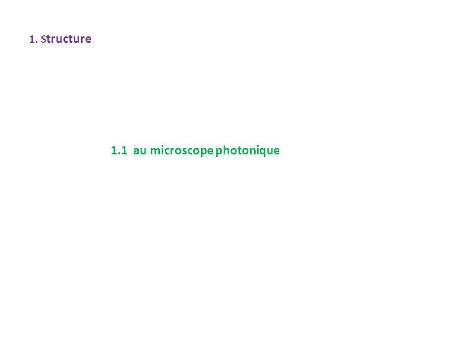 1. S tructure 1.1 au microscope photonique