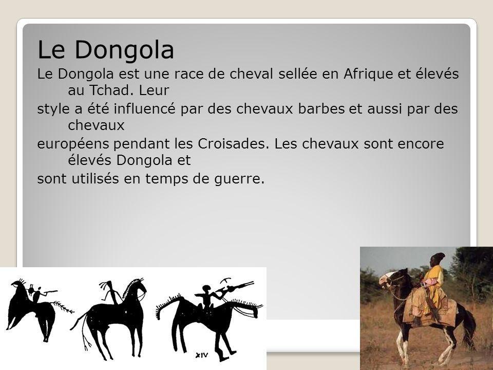 Tchad Le Dongola Le Dongola est une race de cheval sellée en Afrique et élevés au Tchad.