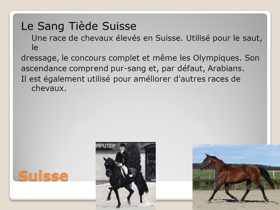 Suisse Le Sang Tiède Suisse Une race de chevaux élevés en Suisse.