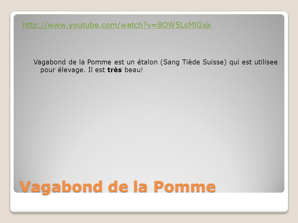 Vagabond de la Pomme http://www.youtube.com/watch?v=8OW5LsMlGxk Vagabond de la Pomme est un étalon (Sang Tiède Suisse) qui est utilisee pour élevage.