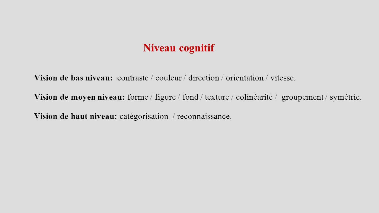 Niveau cognitif Vision de bas niveau: contraste / couleur / direction / orientation / vitesse.