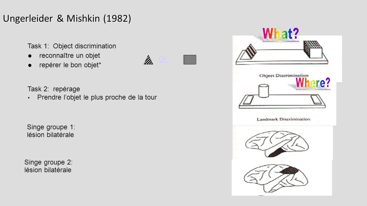 Ungerleider & Mishkin (1982) Task 2: repérage Prendre l'objet le plus proche de la tour Singe groupe 2: lésion bilatérale Singe groupe 1: lésion bilatérale Or Task 1: Object discrimination reconnaître un objet repérer le bon objet*