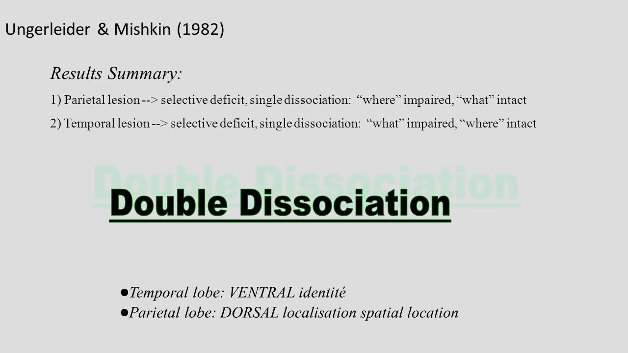 "Results Summary: 1) Parietal lesion --> selective deficit, single dissociation: ""where"" impaired, ""what"" intact 2) Temporal lesion --> selective defic"