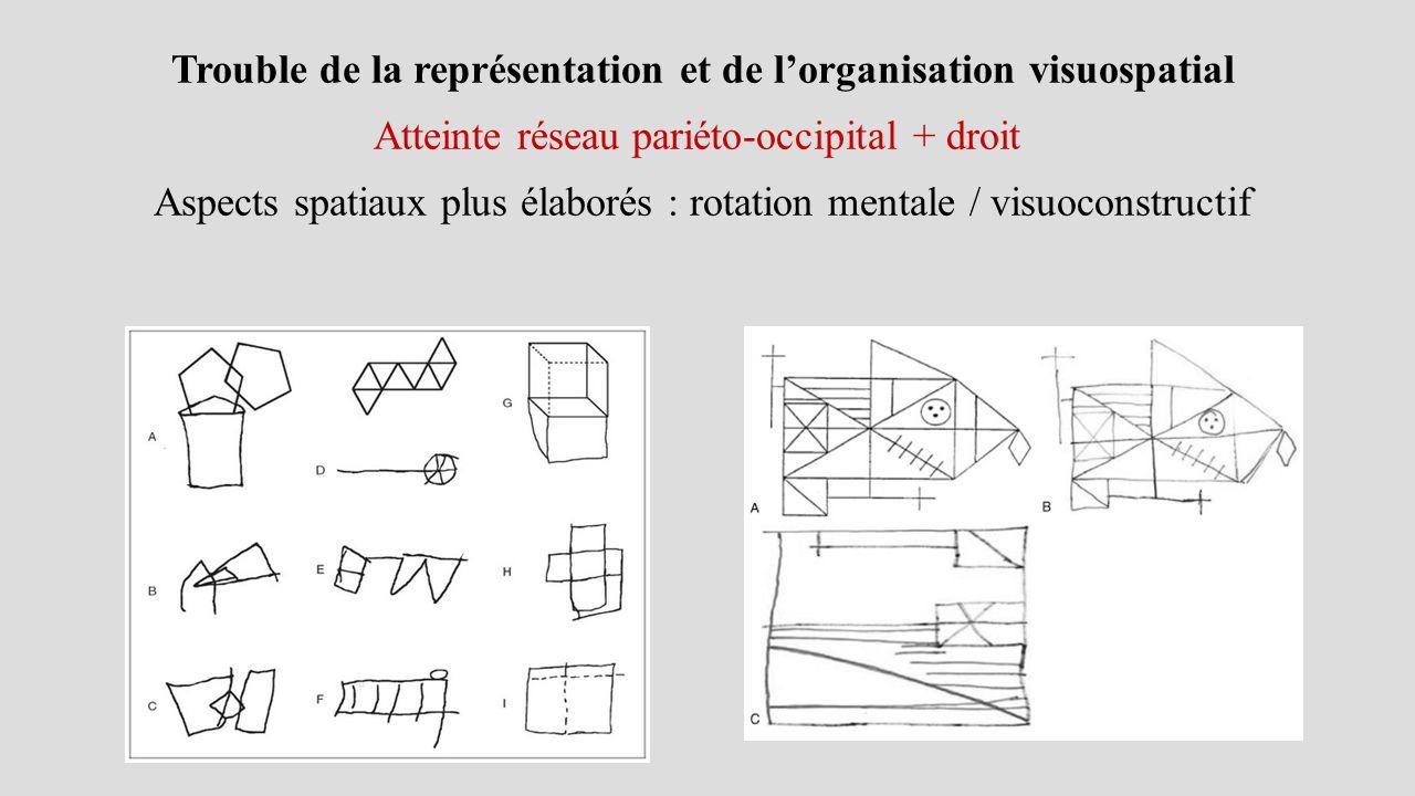 Trouble de la représentation et de l'organisation visuospatial Atteinte réseau pariéto-occipital + droit Aspects spatiaux plus élaborés : rotation mentale / visuoconstructif