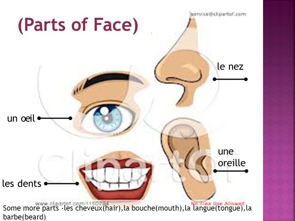 un oeil les dents une oreille le nez (Parts of Face) Some more parts -les cheveux(hair),la bouche(mouth),la langue(tongue),la barbe(beard)