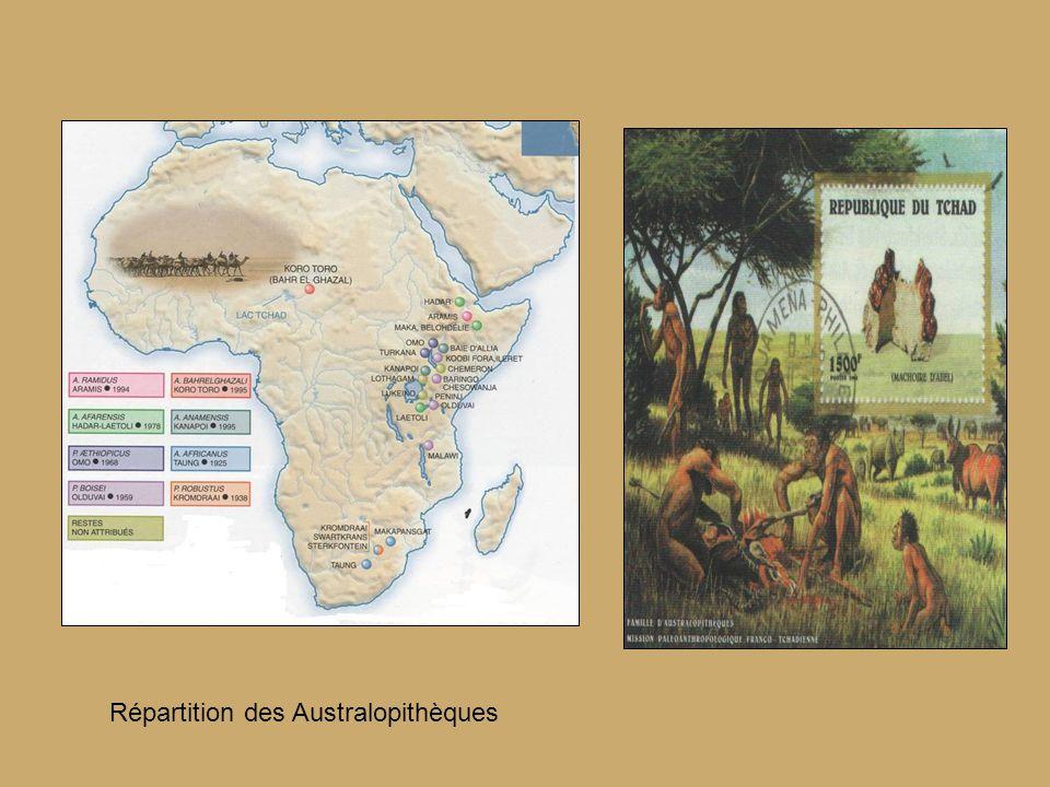Répartition des Australopithèques