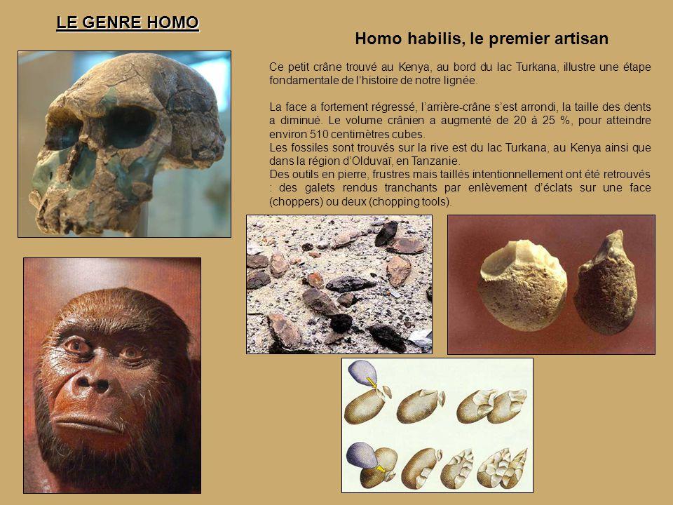 Homo habilis, le premier artisan Ce petit crâne trouvé au Kenya, au bord du lac Turkana, illustre une étape fondamentale de l'histoire de notre lignée.