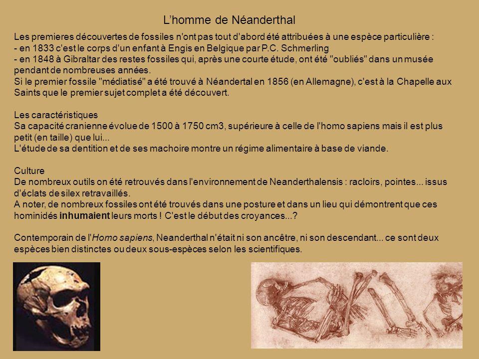 Les premieres découvertes de fossiles n ont pas tout d abord été attribuées à une espèce particulière : - en 1833 c est le corps d un enfant à Engis en Belgique par P.C.