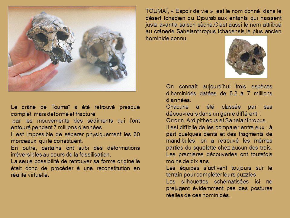 TOUMAÏ, « Espoir de vie », est le nom donné, dans le désert tchadien du Djourab,aux enfants qui naissent juste avantla saison sèche.C'est aussi le nom attribué au crânede Sahelanthropus tchadensis,le plus ancien hominidé connu.