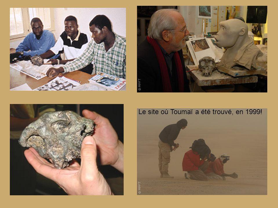 Reconstitution : Toumaï et son milieu de vie de l'époque!